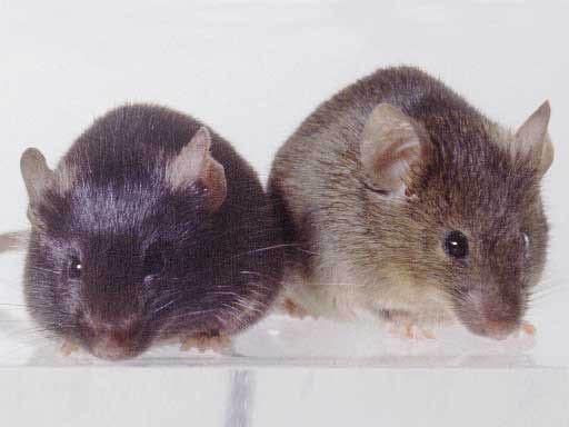 mice,mouse,mice control,mice control in glenside,mice control in 19038,ants,ant control,ant control in glenside,ants in 19038,ant control in 19038