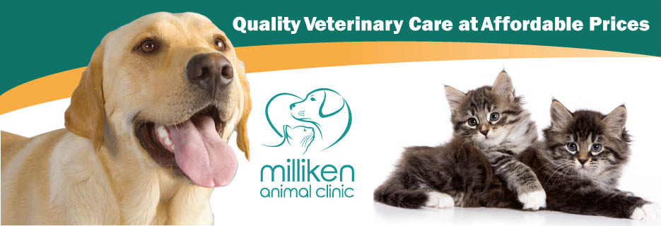 vet coupons, animal services, milliken animal clinic