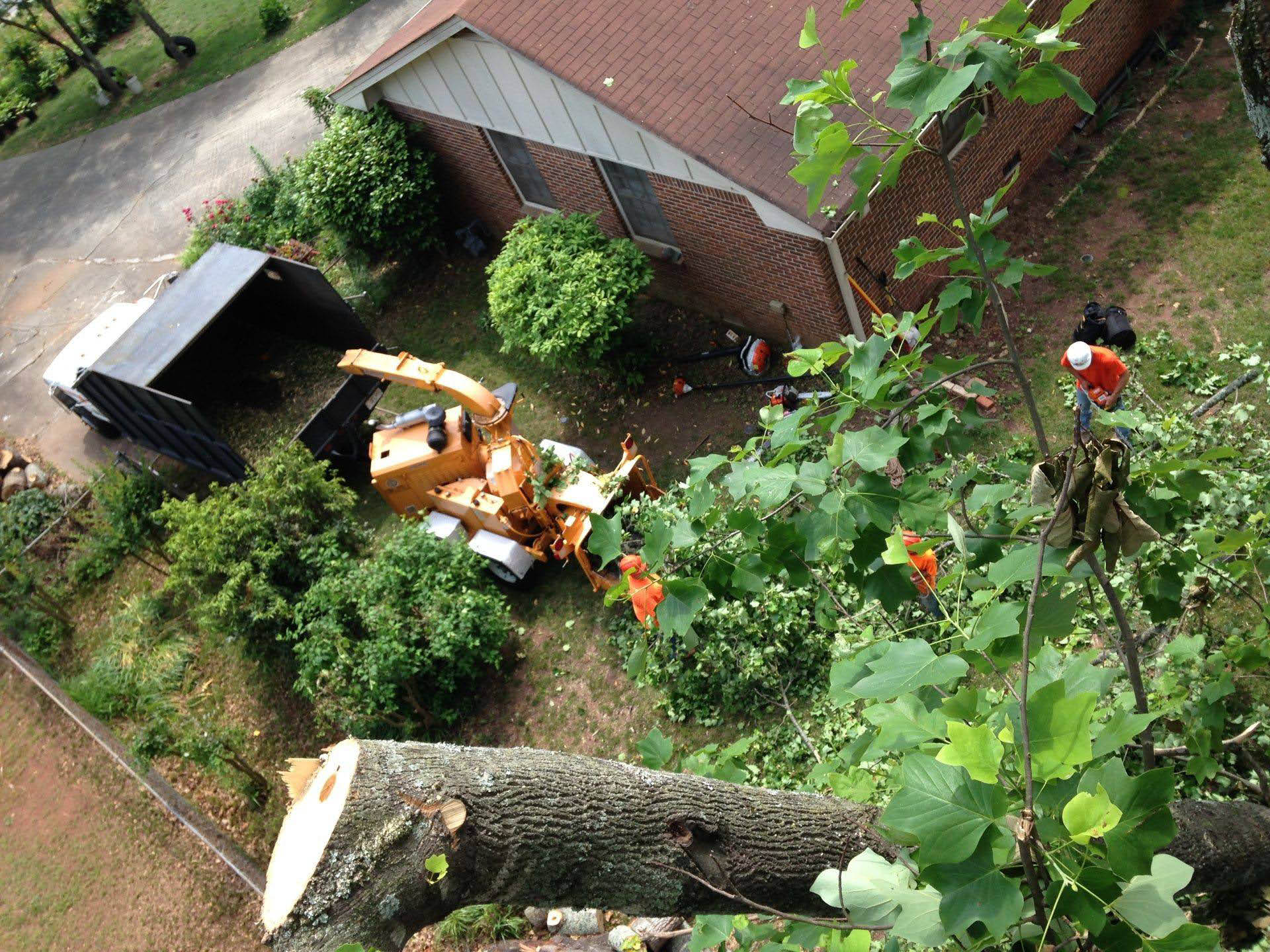 Stump removal, tree services by certified arborist and groundsmen