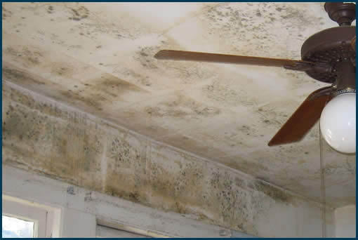 Specialized Cleaning Services, Southeast WI Madison mold damage and repairs