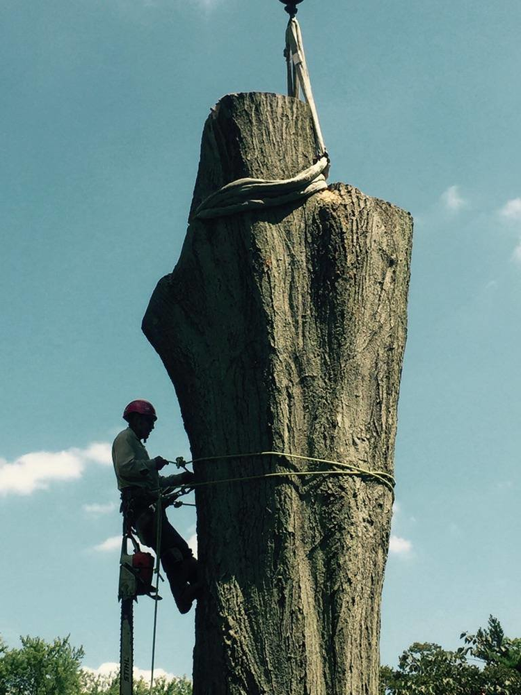 Monster Tree Service Southeast Wisconsin big trees