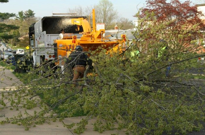 Monster Tree Service Southeast Wisconsin spring cleanup