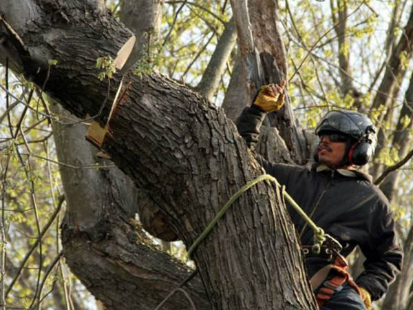 Monster Tree Service tree removal