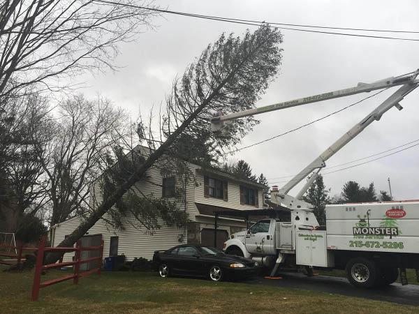 Monster Tree Service hazard tree