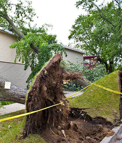 complete tree removal; storm damage cleanup; stump removal in Napa, CA