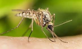 mosquito control near Cayce, SC
