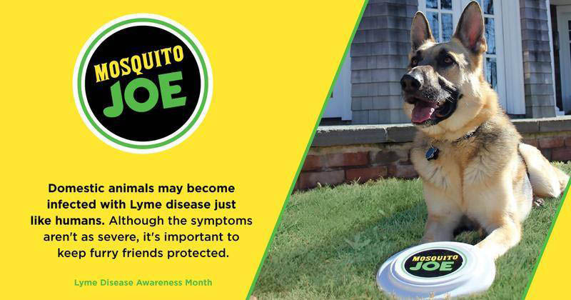 protect your pets with mosquito joe treatments serving Gainesville, Jefferson, Powder Springs or Cumming