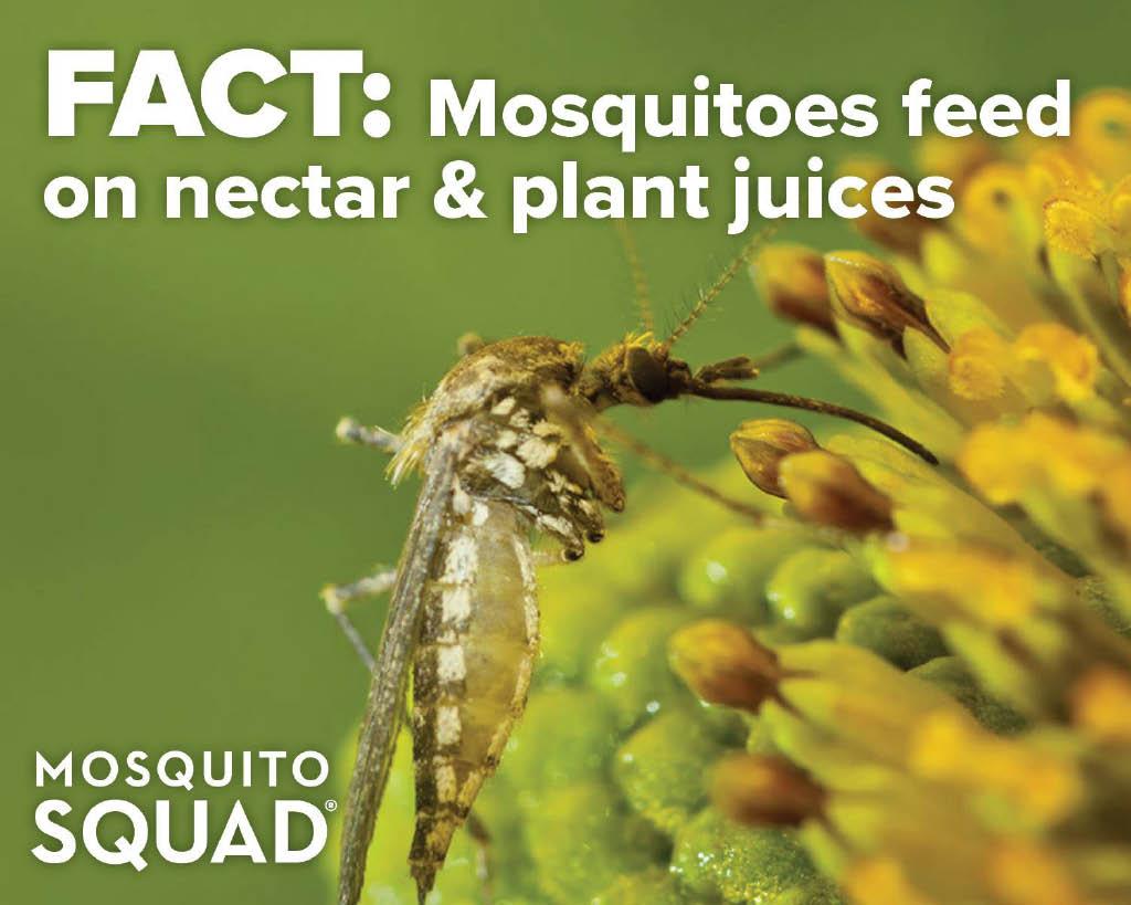 Mosquitos-&-Ticks