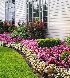 flower and shrub care; mr lawn & landscape