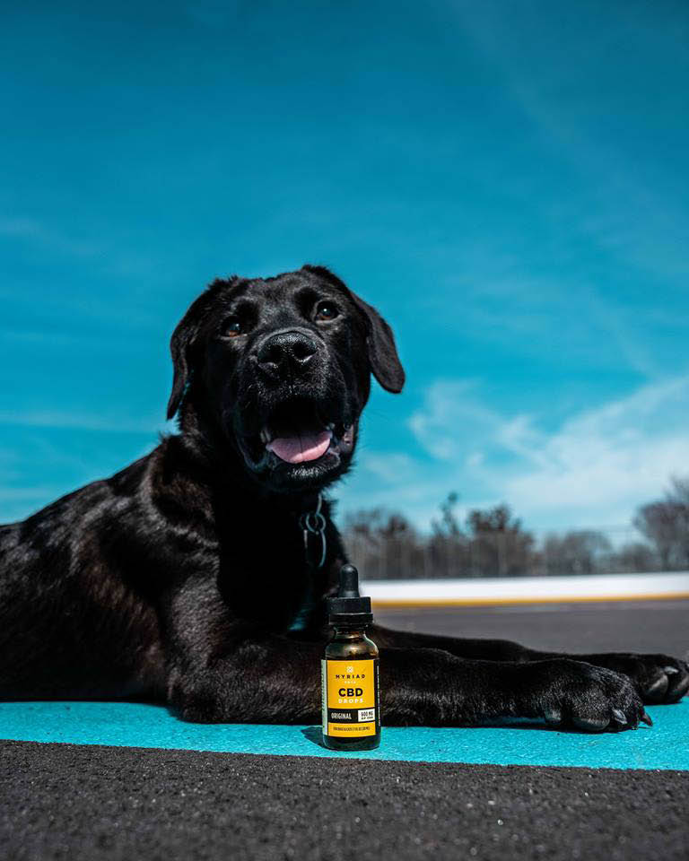 health, pets, dog, cat, pain management, inflammation, anxiety, stress, softgels,