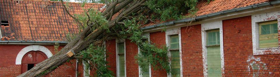 Tree removal near Charleston, SC