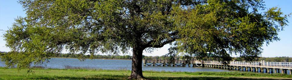 Tree service near Goose Creek, SC