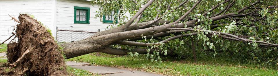 Tree removal near Summerville, SC