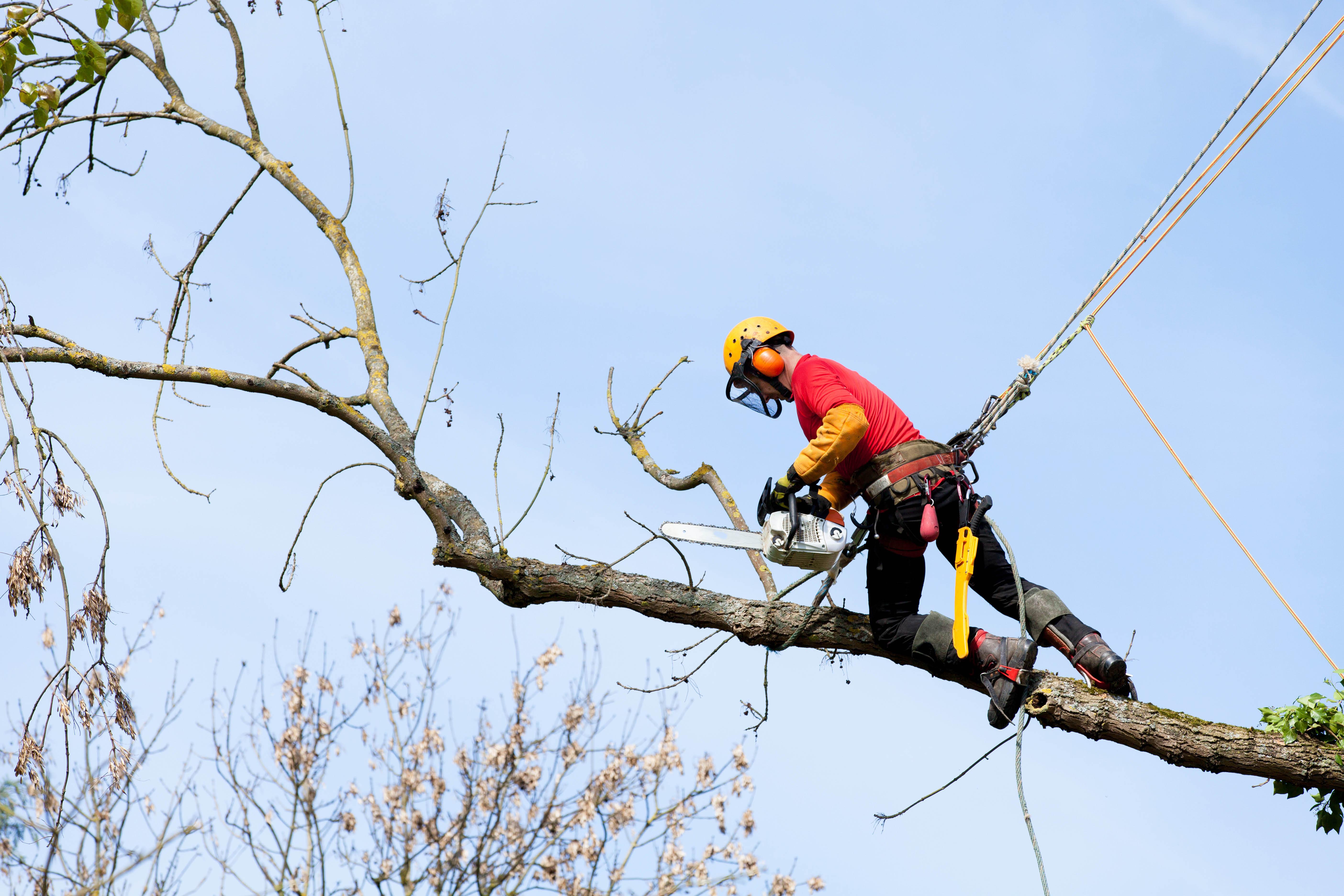 Tree pruning near North Charleston
