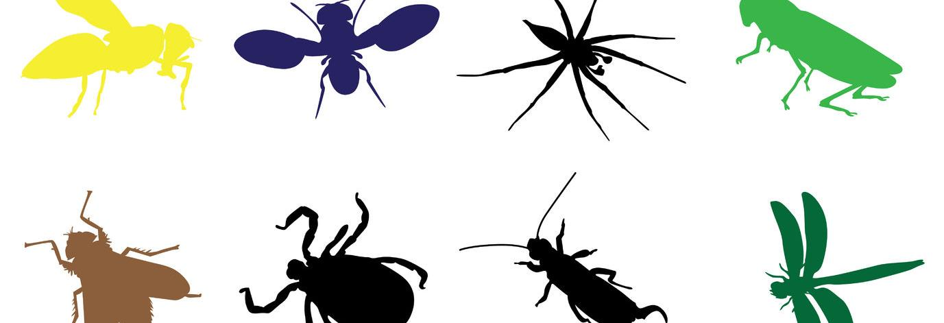 ticks, mosquitos, bug, exterminator