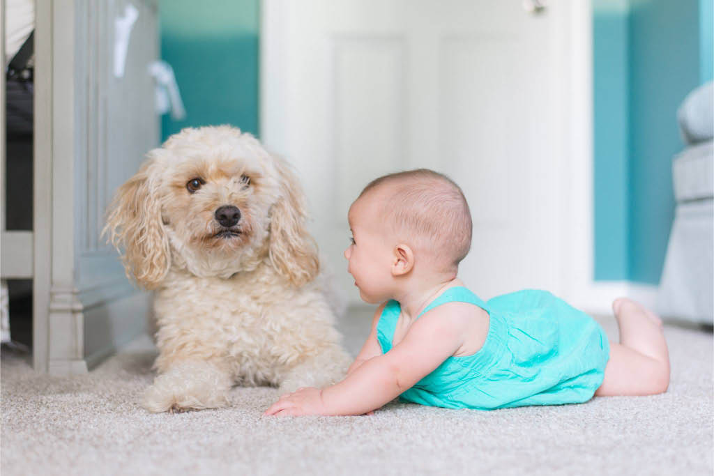 Child and pet-friendly - NW Pacific Green Carpet Cleaning
