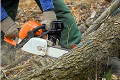 oakes tree service rochester ny tree removal sawing chainsaw