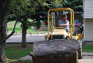 oakes tree service rochester ny