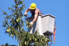 oakes tree service rochester ny cherry picker tree removal coupon