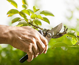 oakes tree service pruning trimming shrubs savings