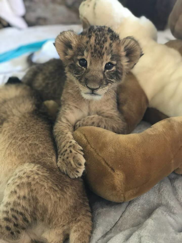 We have three new baby cubs