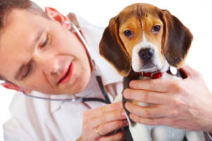 Our veterinarians and staff understand the importance of your relationship with your pet, so we make it our mission to provide a comfortable and caring environment to ensure your pet is as relaxed as possible.