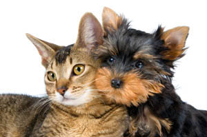Animal hospital for cats and dogs near Ocoee