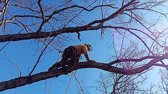 All American Tree Service  tree removal