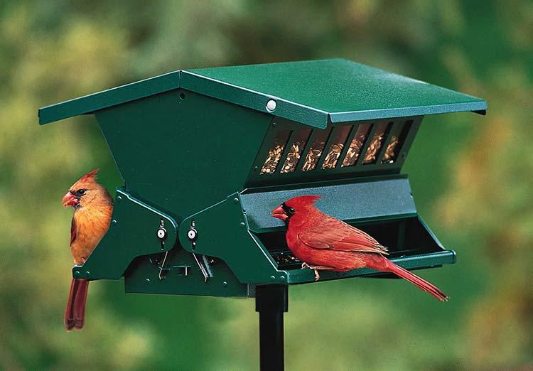 bird feeders bird feed bird seed hummingbird feeders