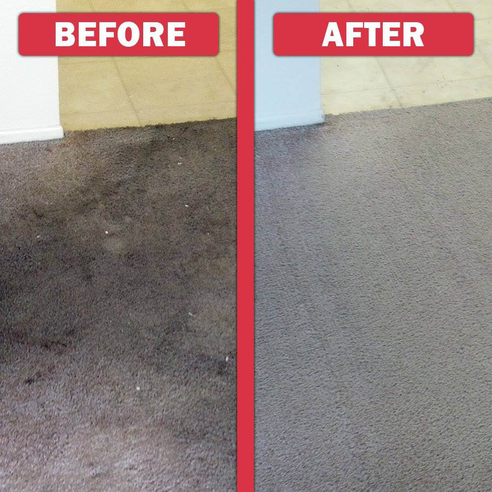Oxi Fresh Carpet Cleaning Of Seattle Local Coupons