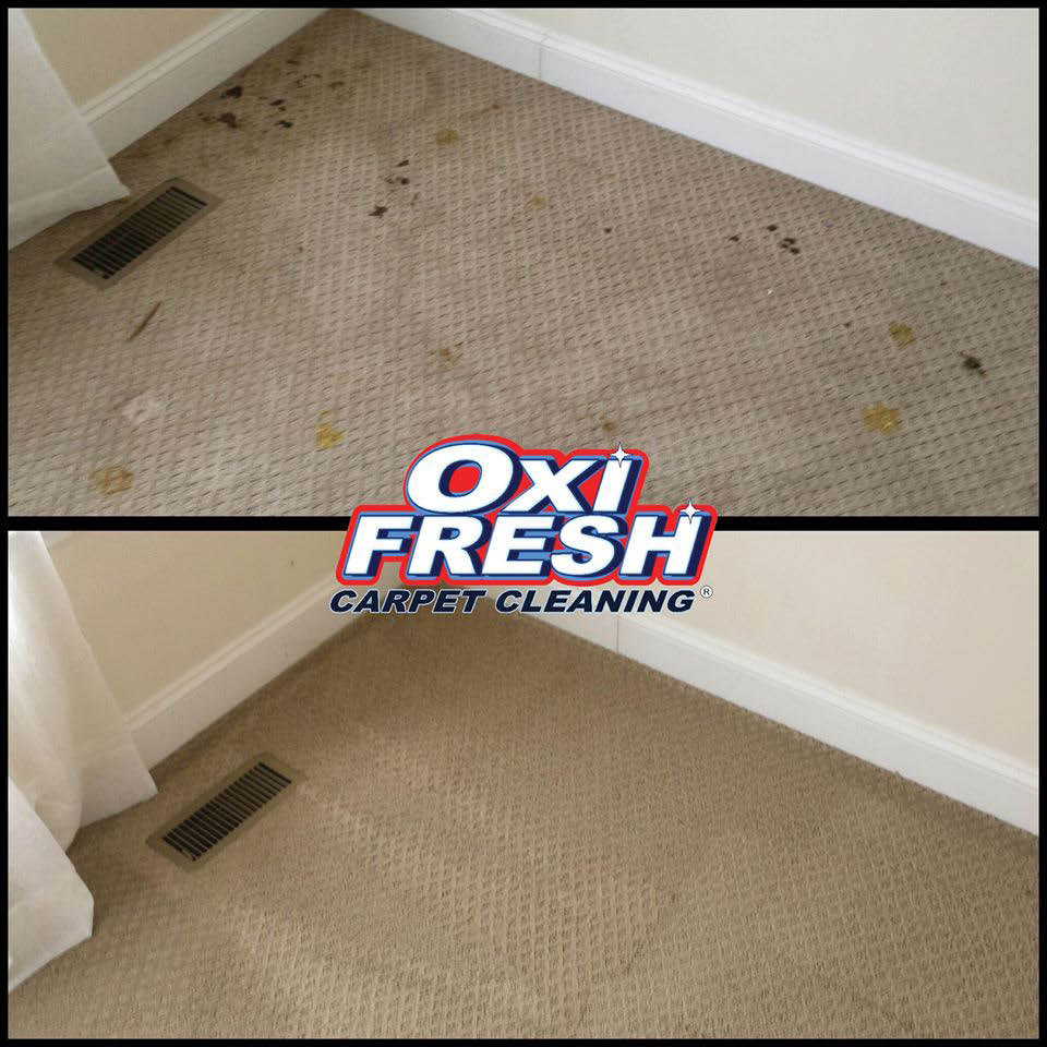 Before and after Oxi Fresh Carpet Cleaning