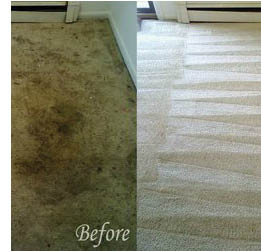 Oxymagic cleans all Residential and Commercial Carpeting including area rugs!