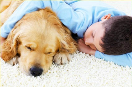 Our Carpet Cleaning solution is green so it is safe for your children and pets.