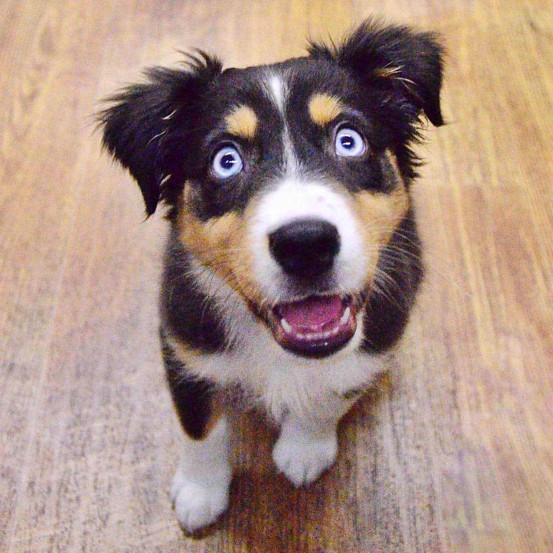 Dog obedience training near Palm Desert, CA