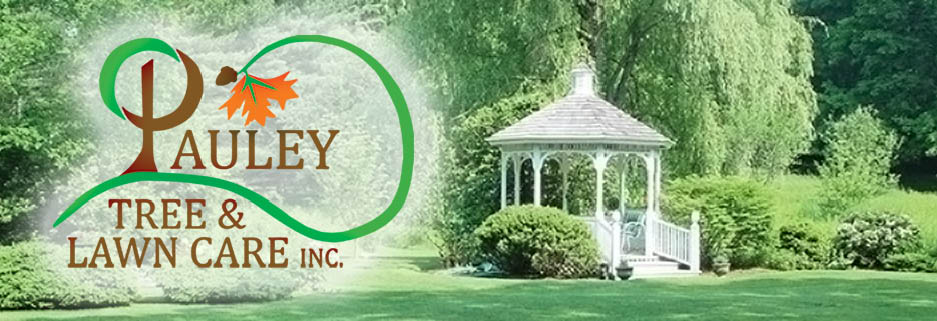 Pauley Tree and Lawn Fairfield County, CT banner image