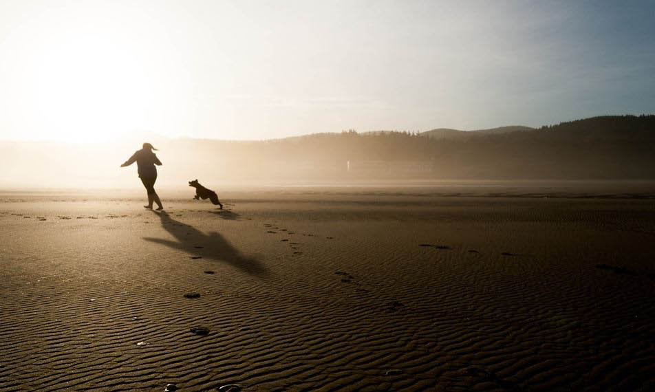 Peaceful Pet Passing is a less stressful experience to other alternatives