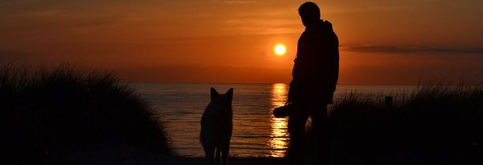Peaceful Pet Passing in Bay Area Counties, CA banner