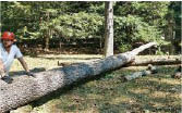 tree removal stump removal tree trimming lot clearing storm damage cleanup fully insured 24 hour emergency services military & senior citizens discounts near me