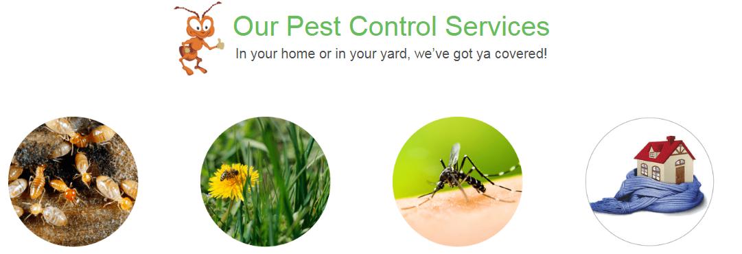 pest control services in virginia