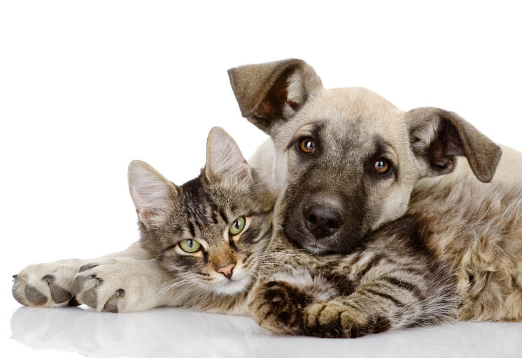 save on vet bills kitten care cat care dog care puppy care animal care
