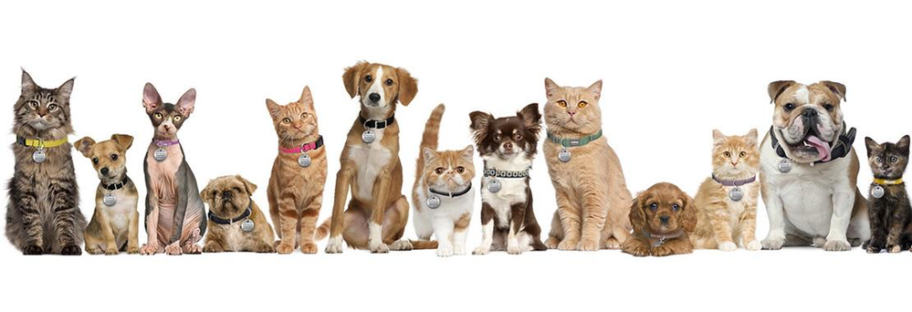 banner of a variety of pets in a line. Pet Goods pet food, supplies and clinic in Yonkers, NY