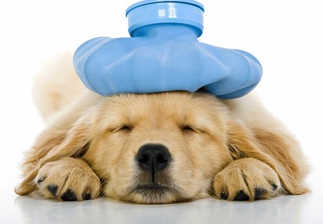 PetCura Animal Hospital of Livermore; sick puppy; dog veterinarian California