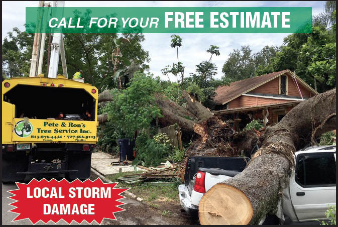 free estimate tree removal pete & ron's tree service, inc. florida