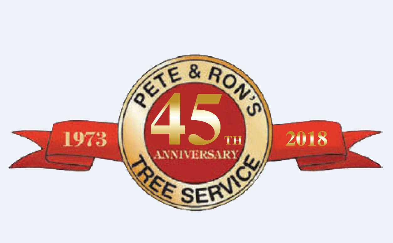 Tampa Bay tree services  Pete & Ron's 45 years tree services in Tampa