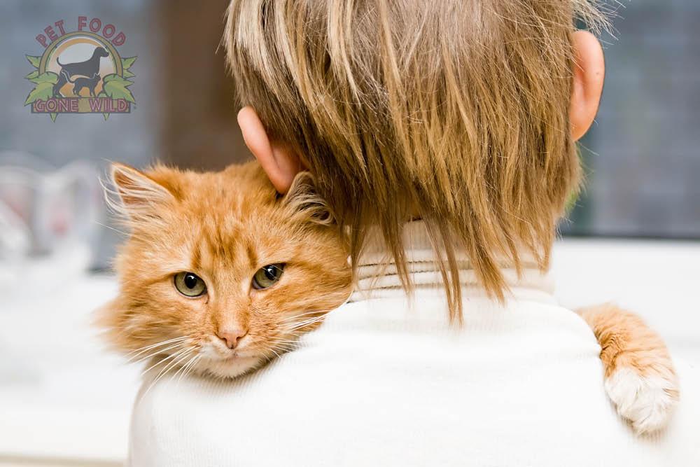 Premium feline foods for carefree cats