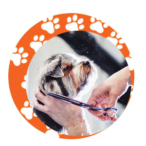 Shaggy dog getting a fur trim; clipping