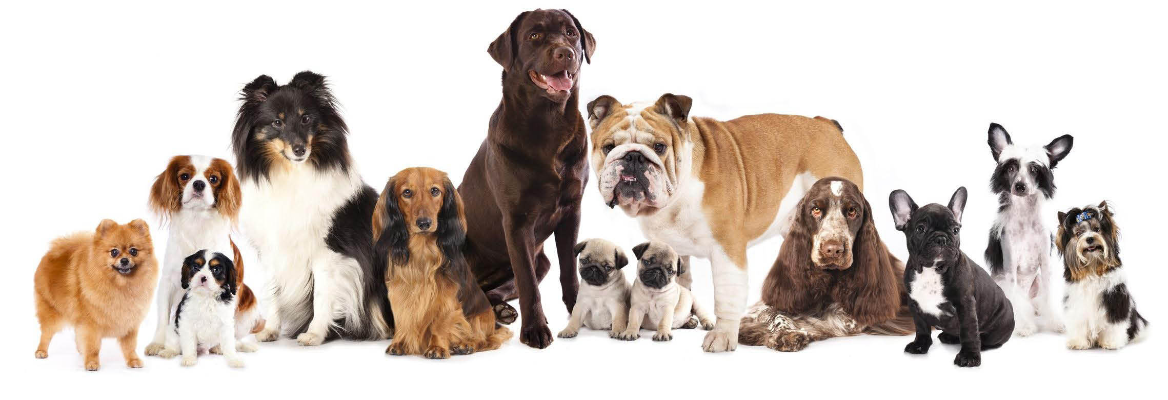 Dog Food Website Banner