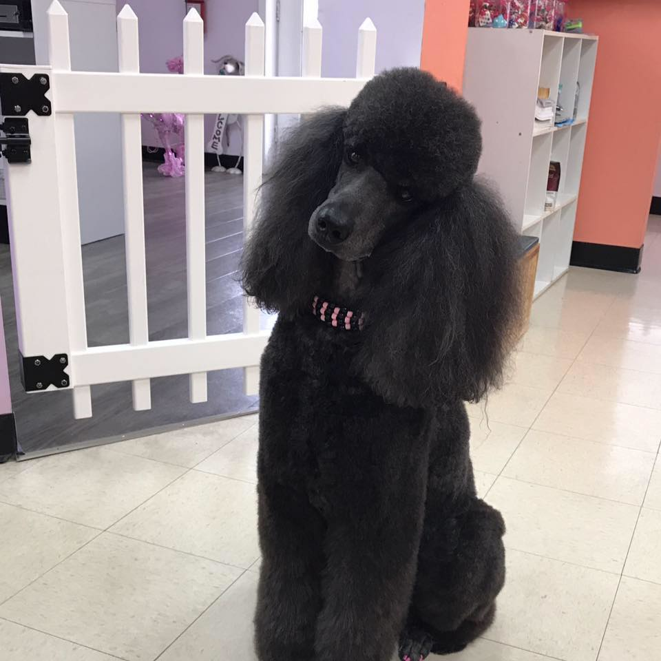 dog groomer dog grooming dog bath doggie spa