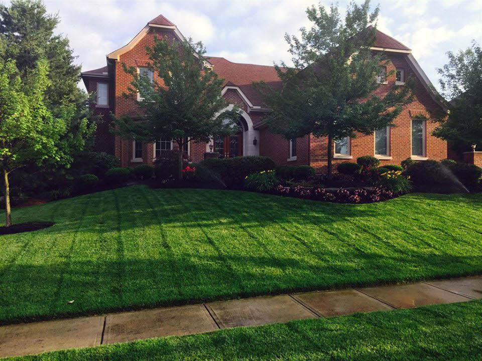 A beautiful lawn by picture Perfect Lawns.