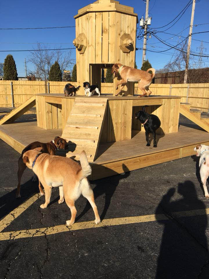 Playtime Dog kennel Wauwatosa